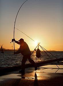 Le régime méditerranéen de la pêche: comment ça marche, avantages